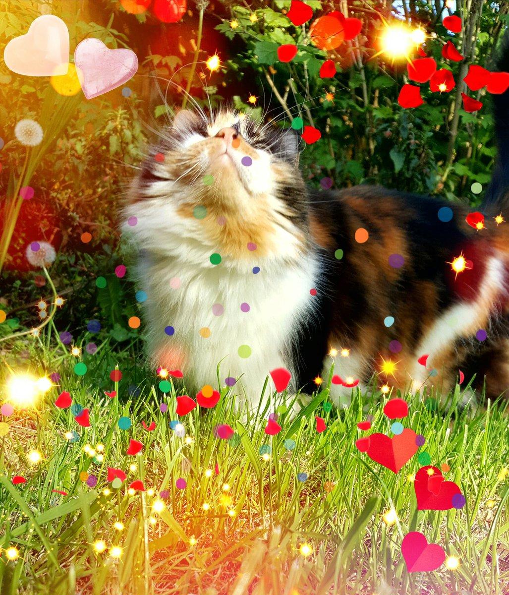 Happy Valentine's #CatsOfTwitter