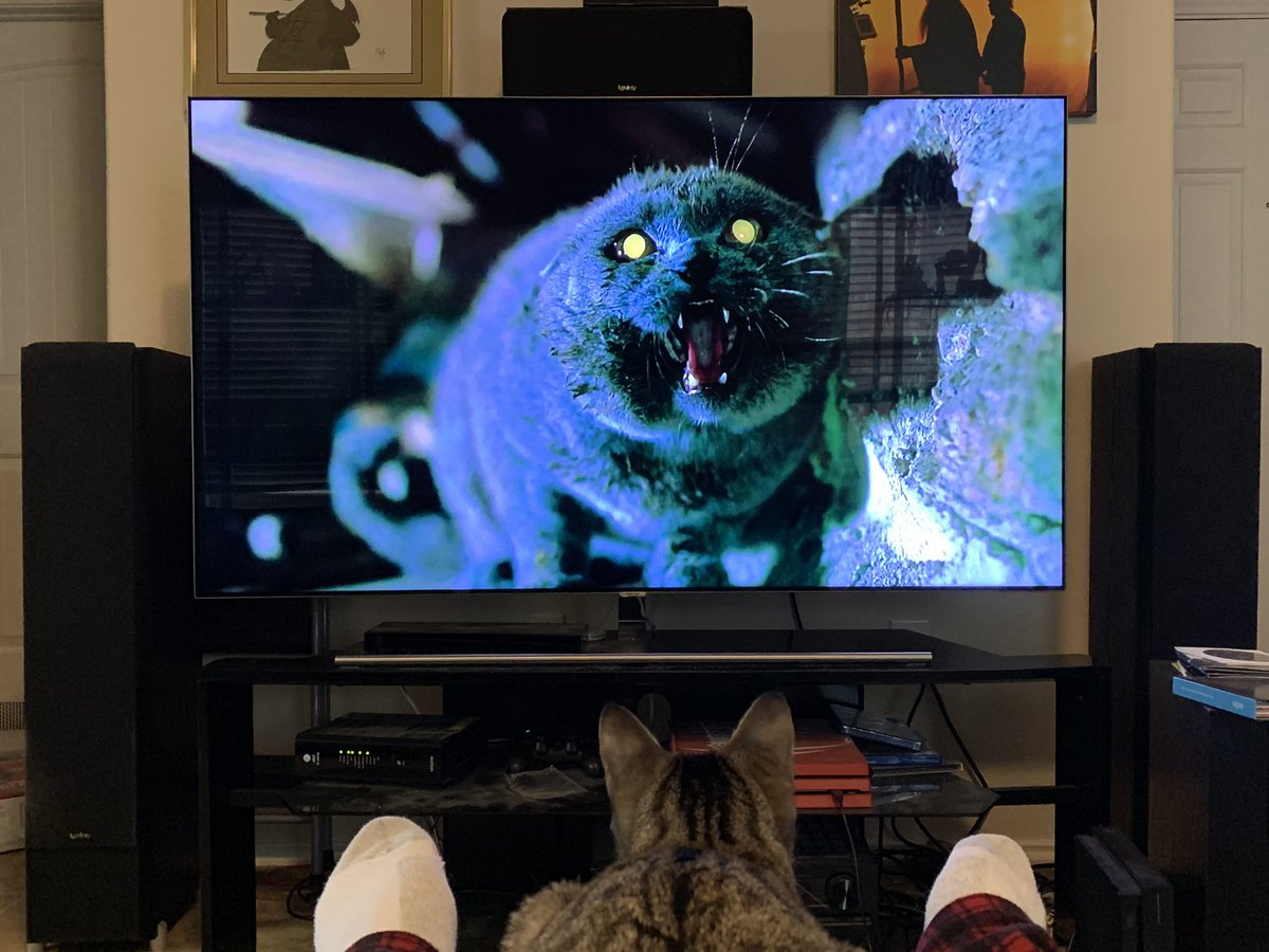 The most appropriate way to rewatch Pet Sematary: <br>http://pic.twitter.com/9tdVgl81fc
