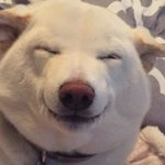 Image for the Tweet beginning: roses are gray violets are gray doge