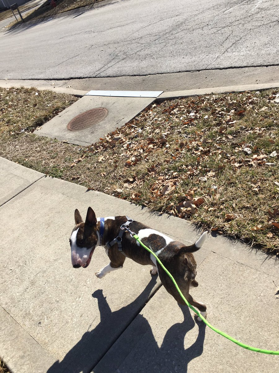 When you live in Kansas City and get 24 hours of nice weather in Feb this is #lunchbreak because sunshine &gt; food (#bullterrier agrees) <br>http://pic.twitter.com/B9KsX3IknB