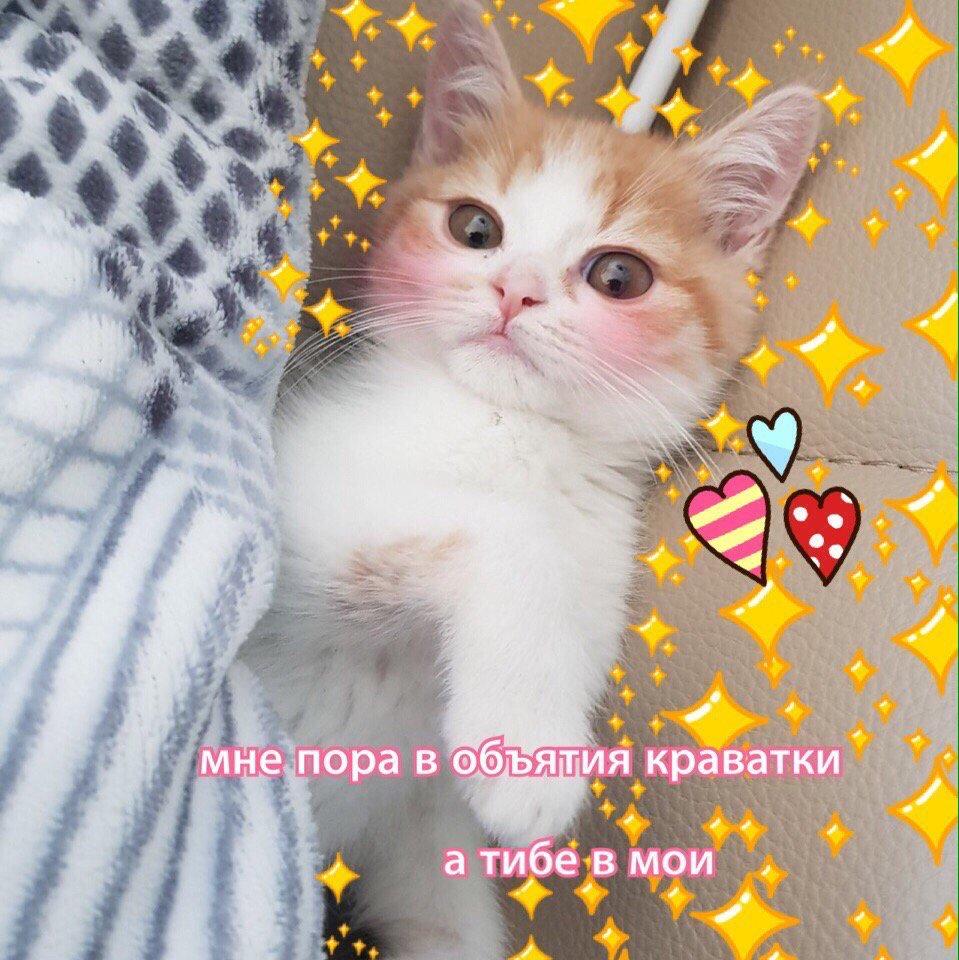 Картинки с котиками милые с надписями