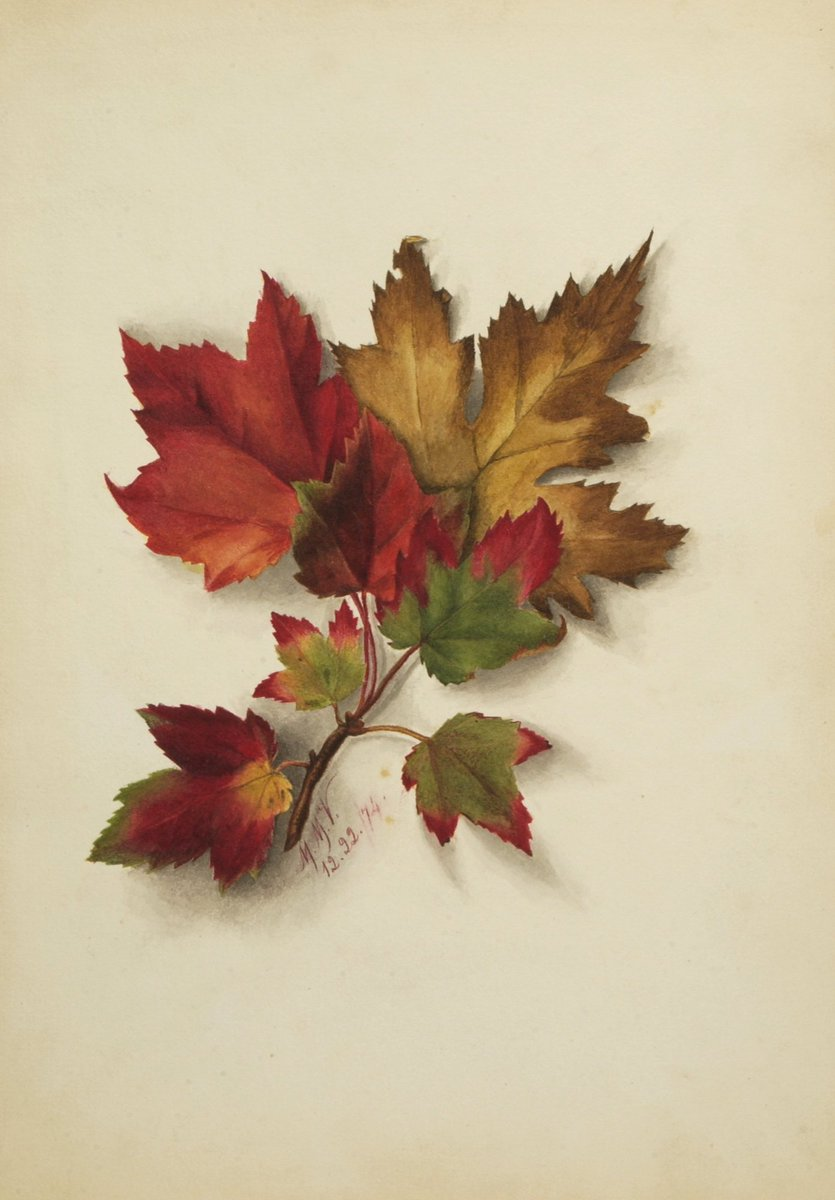 I'm falling for you 🍃🍁😍→ https://americanart.si.edu/artwork/untitled-autumn-leaves-26411…  What can we say, we're feeling a little punny this #ValentinesDay 😉