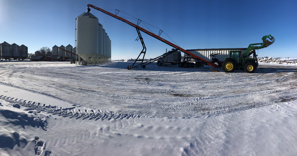 Our @AgGrowthIntl #batcoconveyor is doing a good job putting our grain in these top notch magnum-G @Westeel_1905 bins for safe keeping! #WestCdnAg #plant19seed #AACConnery #wheat #binsandconveyorsallday  #stillcoldout #warmupalready