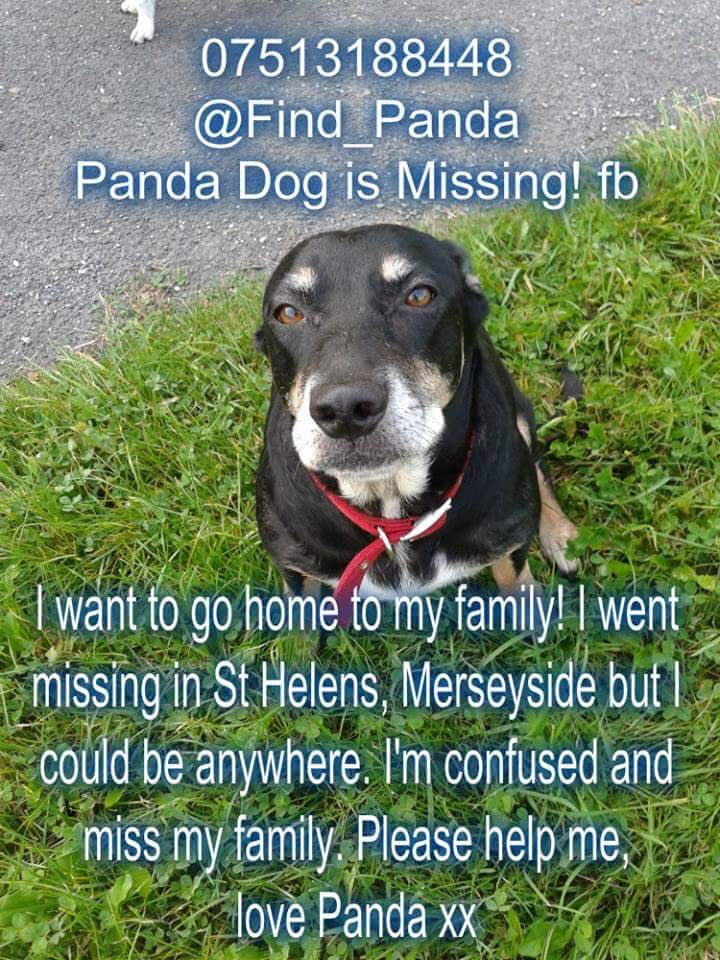 Pls RT today's #LongTermMissing and help #FindPanda #MissingDog #SuttonHeath #StHelens #Merseyside #WA9 30/01/15 #female #spayed #crossbreed. Panda&#39;s family are still searching they will  #NeverGiveUp Have you seen her?   TY @Find_Panda   http://www. doglost.co.uk/dog-blog.php?d ogId=82154 &nbsp; … <br>http://pic.twitter.com/Ir8XCJjTud