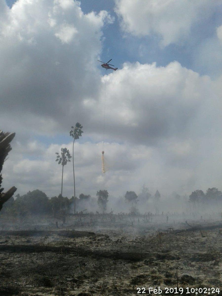 Heli Superpuma dan satgas darat terus padamkan kebakaran hutan dan lahan di Riau.  Total 858 ha lahan sudah terbakar sejak 1/1/2019 - 21/2/2019. Sebarannya: Rohil : 117 Ha, Dumai : 46.5 Ha, Bengkalis : 639 Ha, Meranti : 20.2 Ha, Siak : 5 Ha, Pekanbaru : 16.01 Ha, Kampar : 14 Ha.