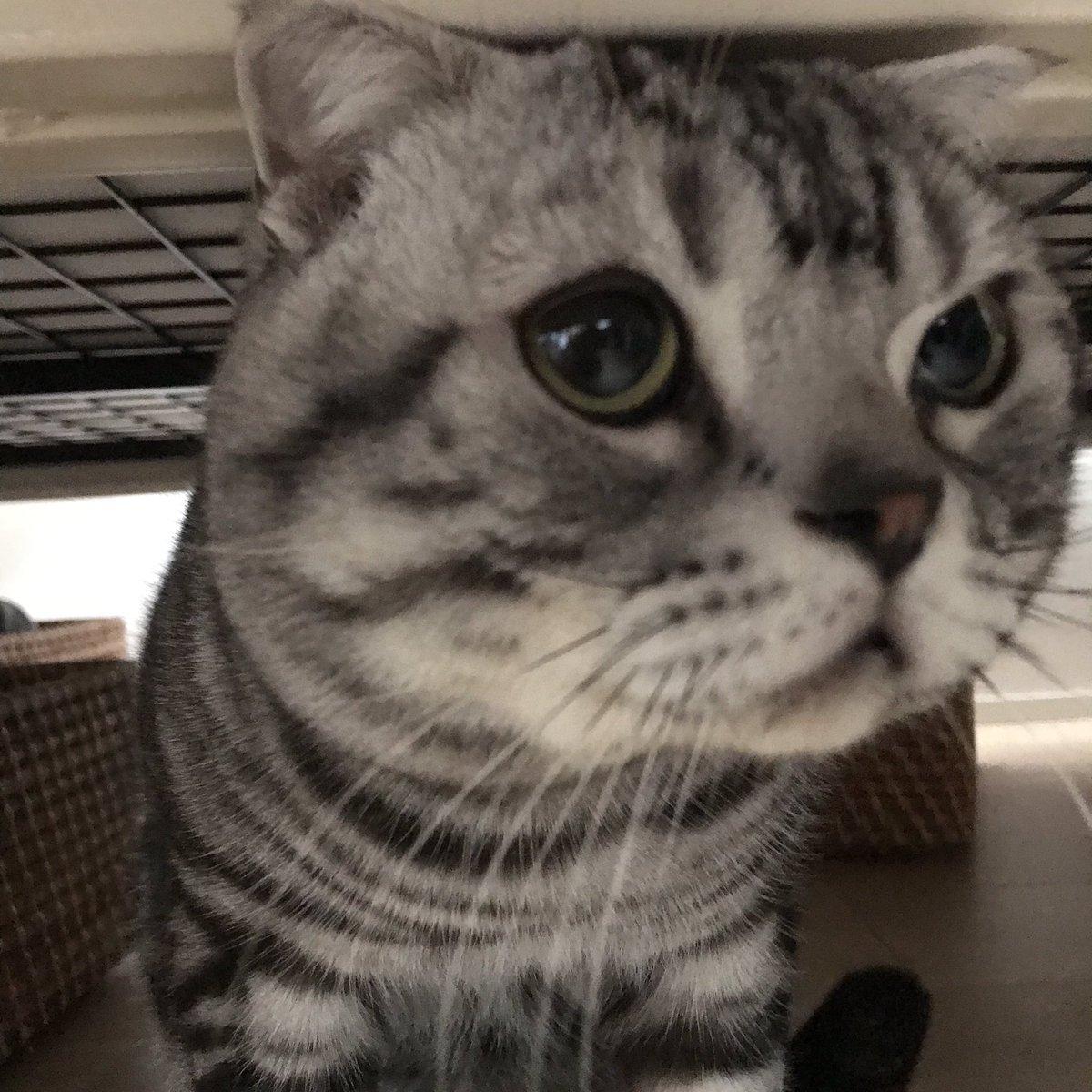 うぅぅ🐱 ベッドの下がお気に入りです  #猫 #cat #ビス