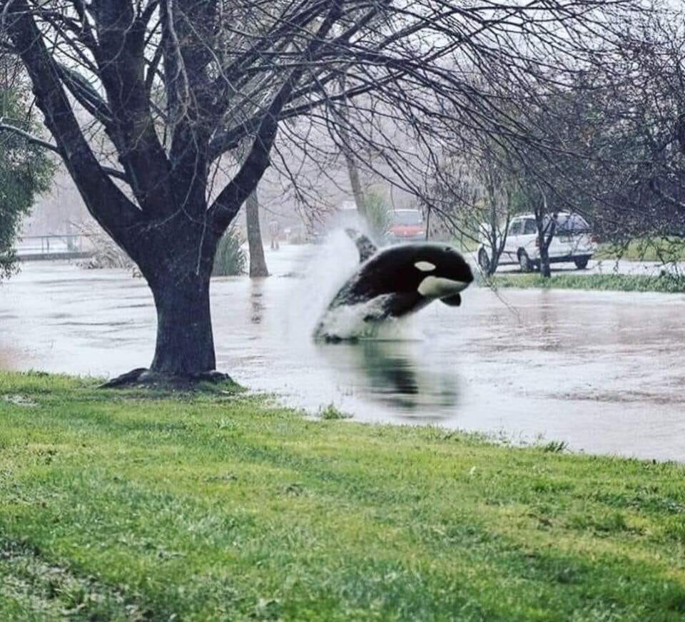 Be careful in the rain you guys. I saw this earlier in temecula. #LARain #californiarain<br>http://pic.twitter.com/5qJEfnJsGx