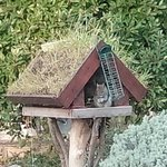 Image for the Tweet beginning: A grey squirrel having his