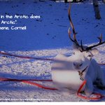 Image for the Tweet beginning: Why Is Arctic Well-Being Essential