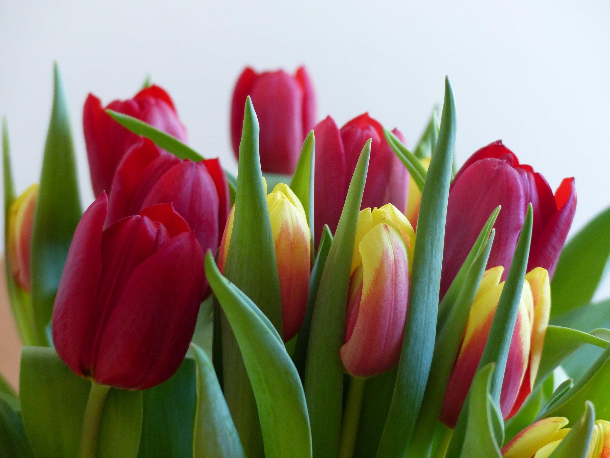 Картинка, тюльпаны фото