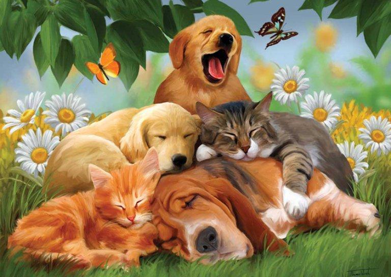 Открытки коты и собаки, рождением