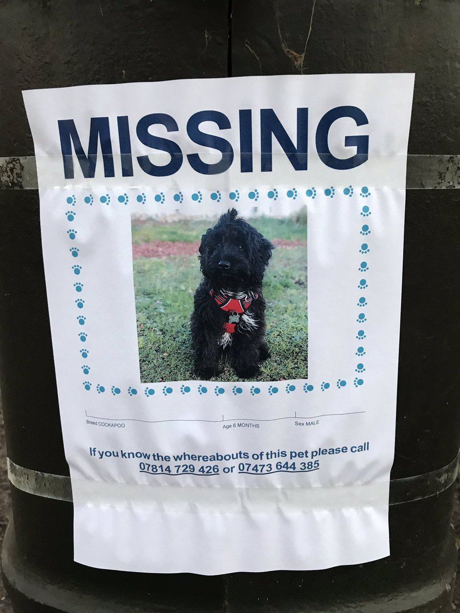 Posters in Battersea Park #missingdog  #batterseapark #lovelondon #lovedogs Twitter do your best!<br>http://pic.twitter.com/XWH2A7PawX