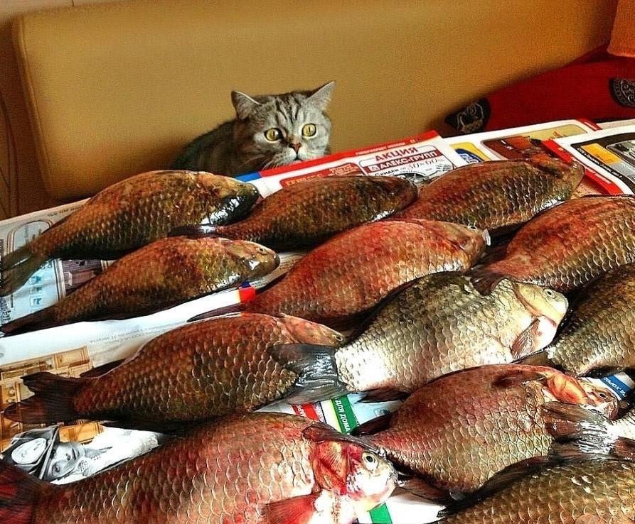 Прикольные картинки кота и рыбки