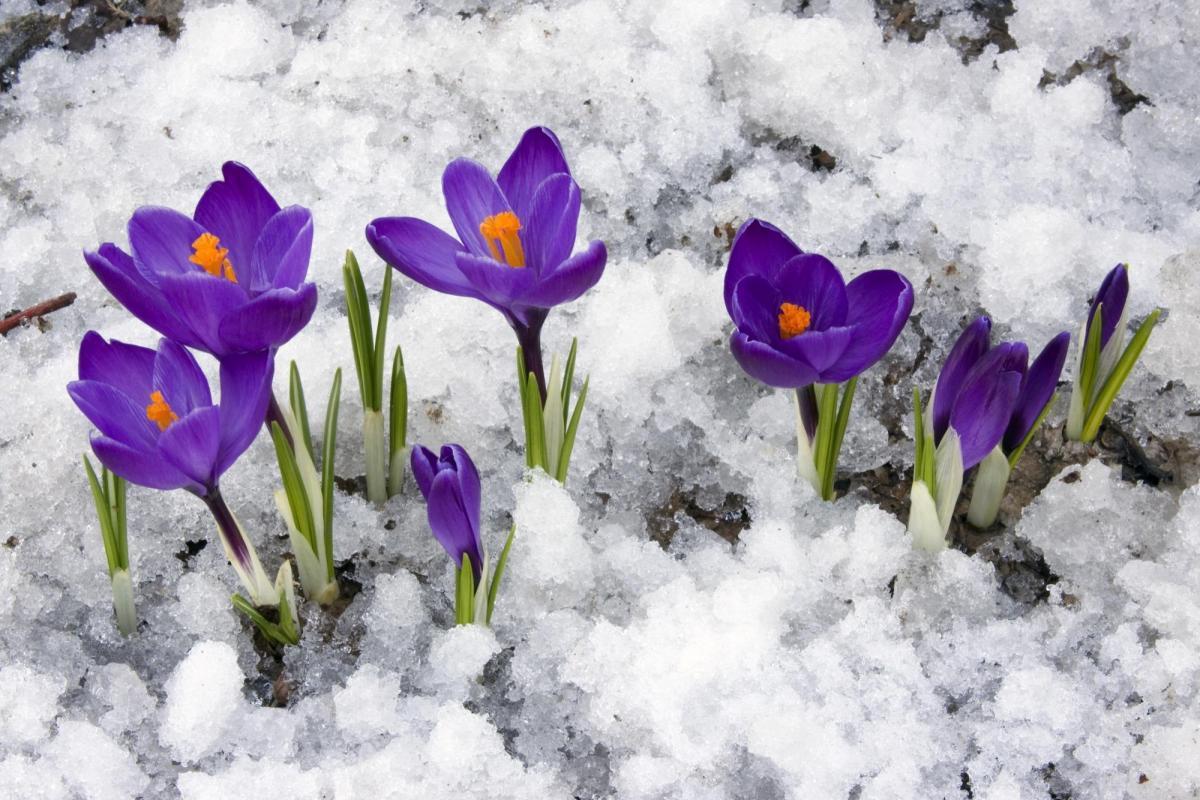 Похолодание и снег прогнозируют в Курской области на выходных