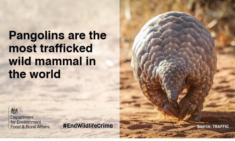 It's World Pangolin Day! #DYK there are eight types of pangolin?   These magnificent creatures are endangered as a result of wildlife crime. We want to #EndWildlifeCrime to protect animals like the pangolin. <br>http://pic.twitter.com/QvQo7iWAl1