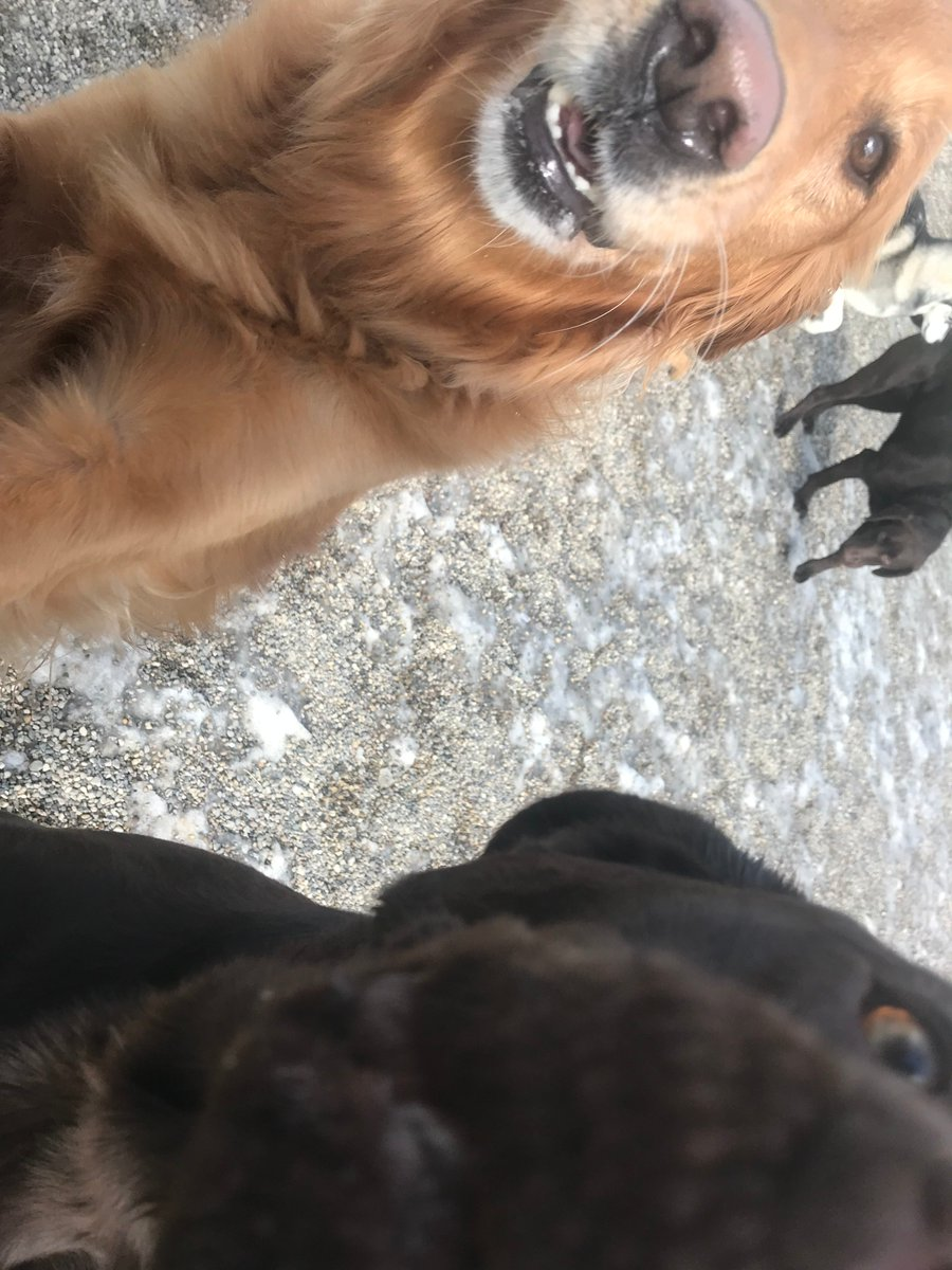 Maggie Mae and Roxie come in for a close up!