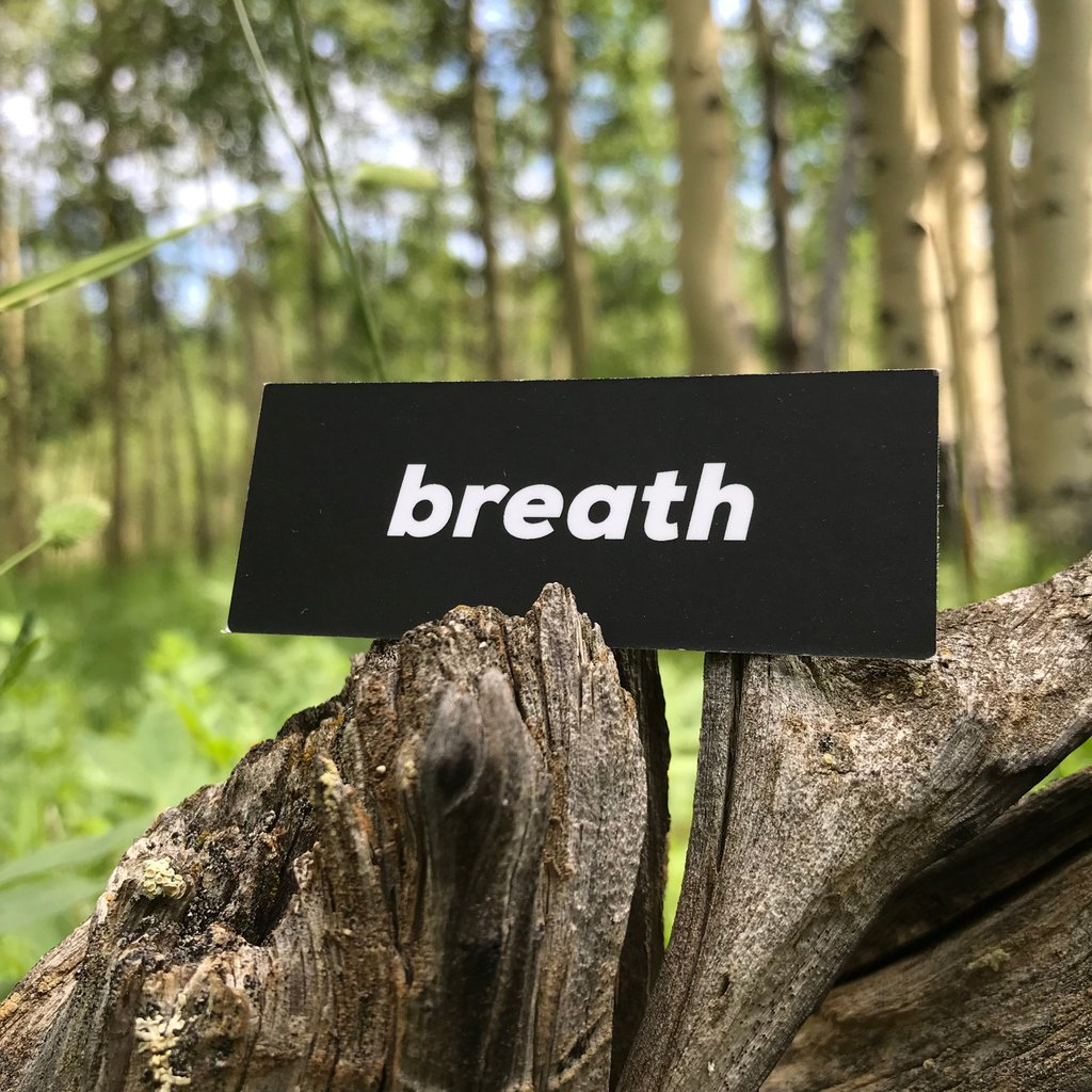 May your day be a breath of fresh air!!  #rootsfly #natureofcreativity #inneroracle #wisdomwithin #embodiment #peacefulwarrior #heavenonearth #reflection #earthoracle #natureismychurch #walksoftly #eartheangels #lightworkersunite #begrounded #interconnected #aspen