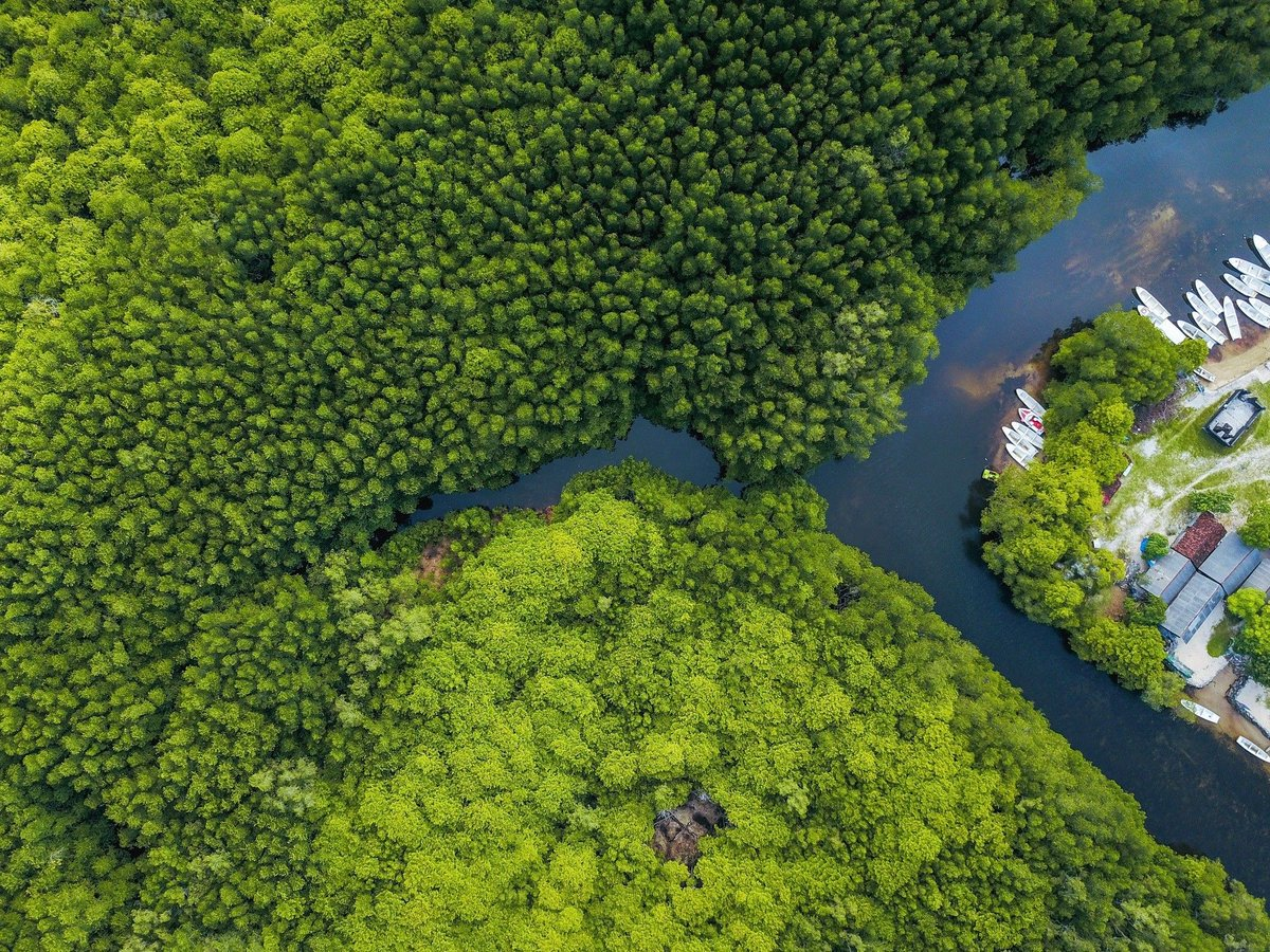 5 reasons to protect mangrove forests for the future https://wef.ch/2SEayZI #nature #environment