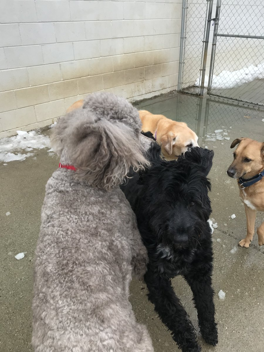 Dega, Teddy, Molly, and Louis spending time together!