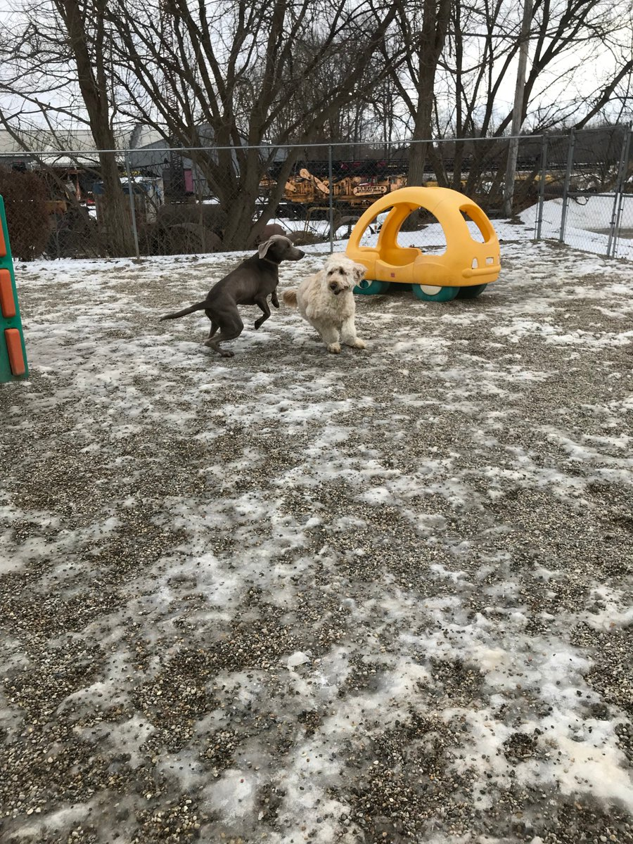 Stitch and Riley race across the yard