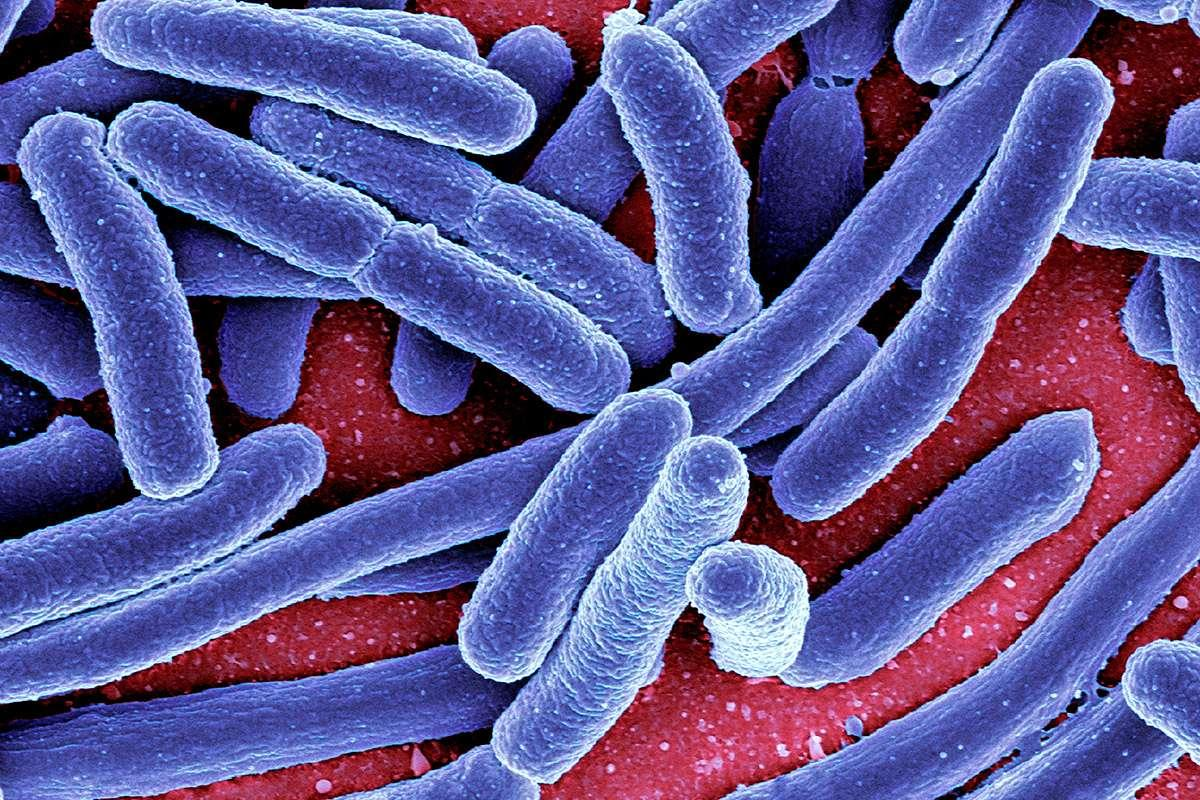 A gut bacteria toxin that damages DNA may be involved in bowel cancer https://t.co/v1P4UPAIxP