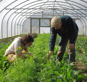 test Twitter Media - .@BDACollege have two training options available for those who want to become involved in #biodynamic farming and gardening https://t.co/SdI80GJlrU https://t.co/wz6adUum6x