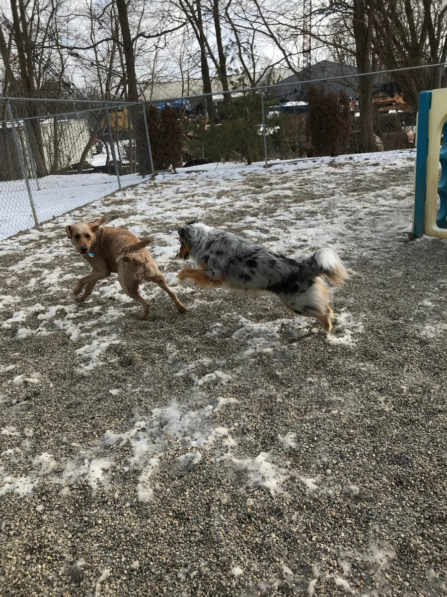 Leeloo gets Fergus to chase her