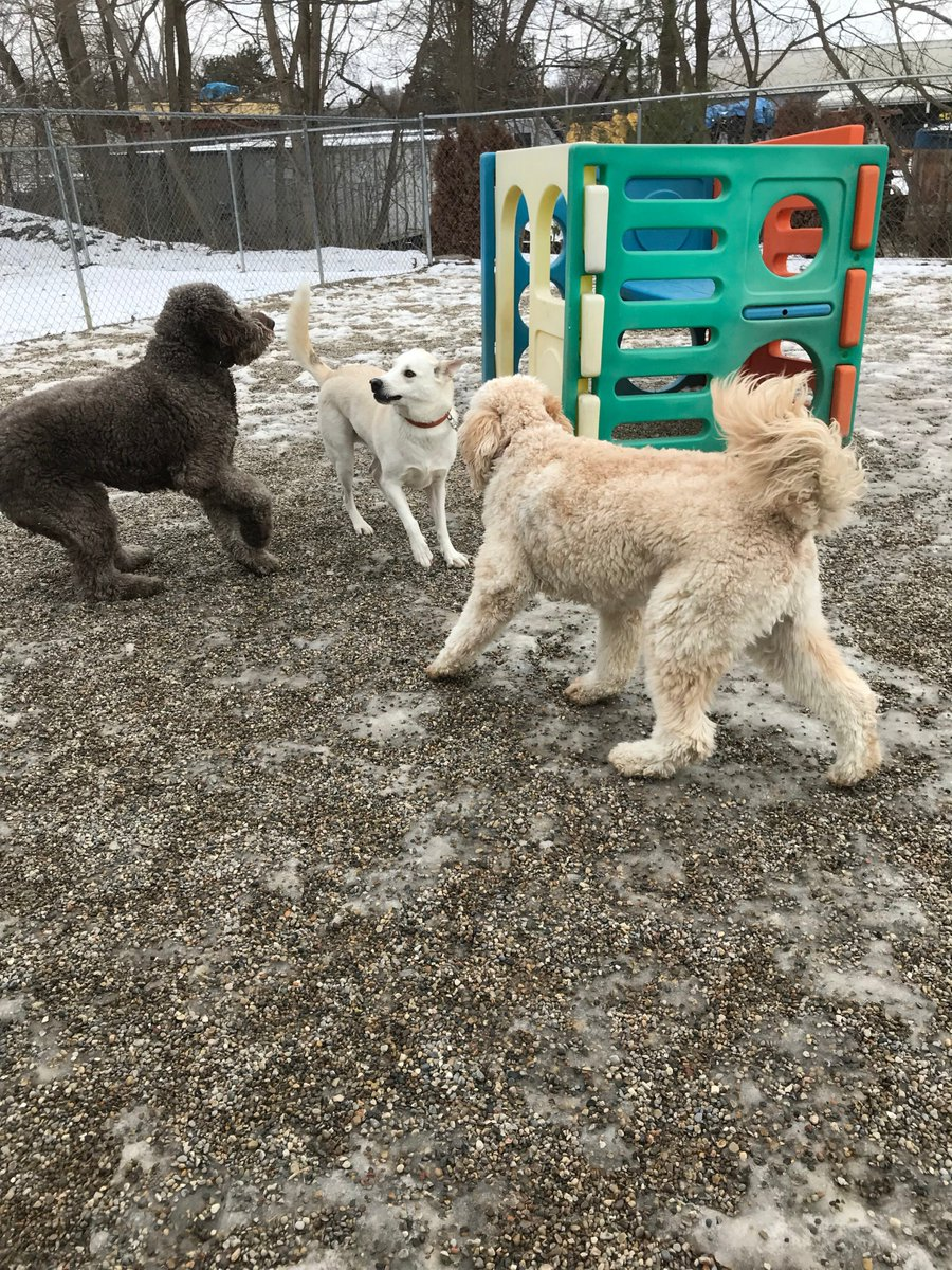 Tucker and Riley H ask Leif to play