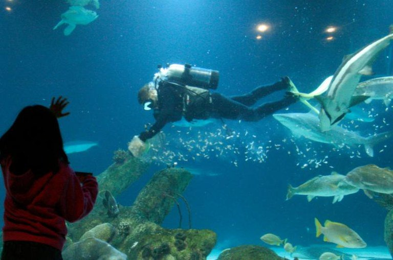 Join us for Scuba Day at the @abqbiopark Aquarium 10 am-2 pm on Saturday, Feb. 16. Learn about this aquatic activity and learn about local diving sites. Divers will give a special narrated dive in the Shark Tank at 2 p.m. Details at http://www.cabq.gov/culturalservices/biopark/news/scuba-day-at-the-aquarium… #OneABQ