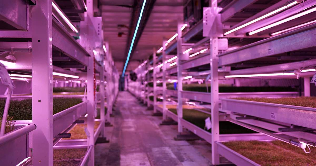 Growing Underground: Eco-farm flourishes in London WWII bunker https://t.co/I1icuOFF20