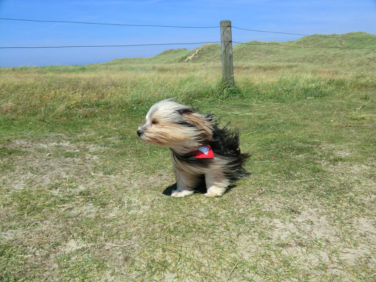 windblown dog