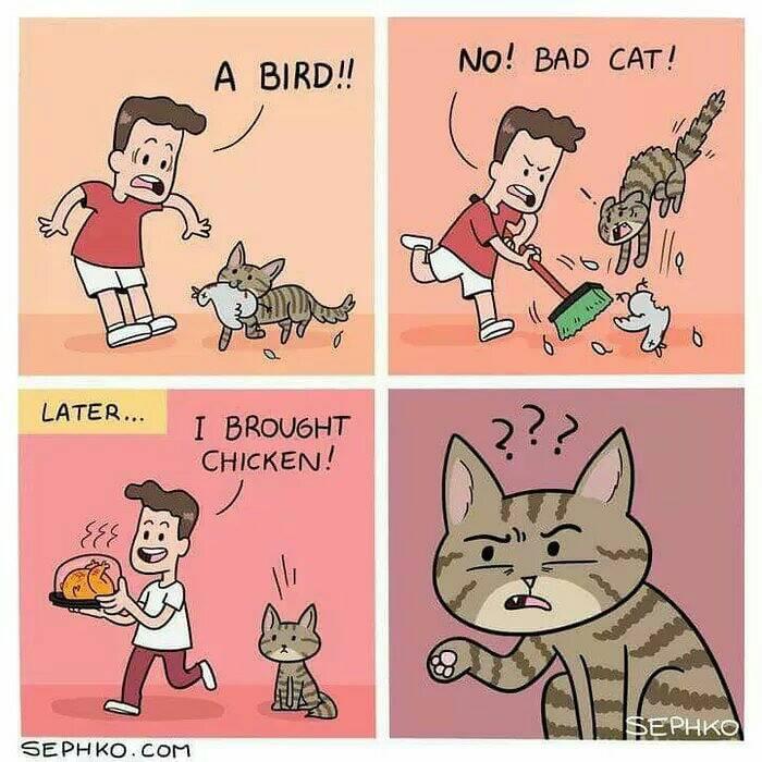 #comic #comedy #meme #memes #memesdaily #catmeme #comics #humor #lol