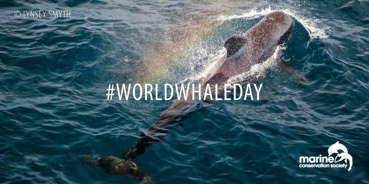 Happy World Whale Day everyone 🐳  #WorldWhaleDay