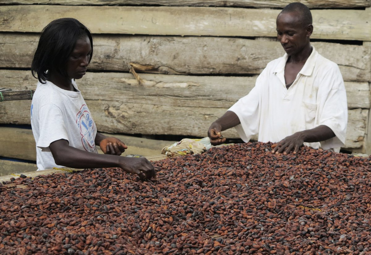 An estimated 25% of the population of Côte d'Ivoire—about 6 million people—are dependent on earnings from cocoa https://brook.gs/2V04S9p