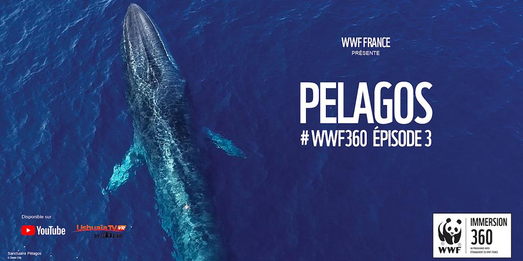 🌊🌊🐋 🌊🌊 #WWF360 épisode 3 : plongez dans une mission du #WWF au plus près des baleines de la #Méditerranée 👉 https://t.co/hK0BI2fW6w #Pelagos  #WorldWhaleDay