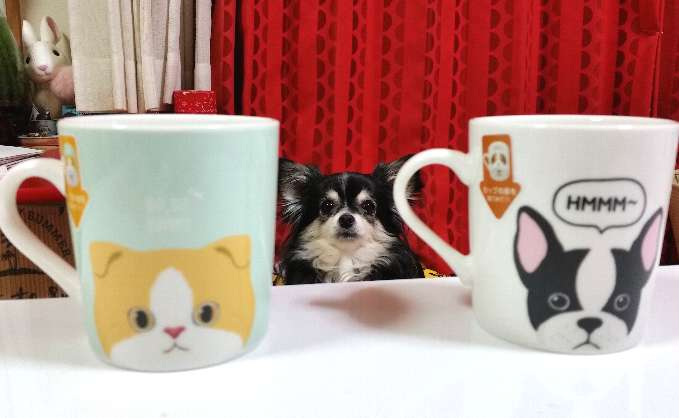 test ツイッターメディア - ダイソーで可愛いコーヒーカップを買いましたヨ  #ダイソー #コーヒーカップ #チワワ  #可愛いモノ https://t.co/810aOfU3Bk
