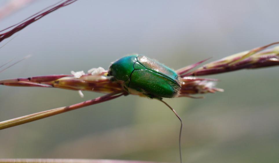 La méta-analyse sur la disparition des insectes qui a fait grand bruit la semaine dernière va jusqu'à évoquer le concept de 6e extinction.  https://t.co/hlyIDeAcC6
