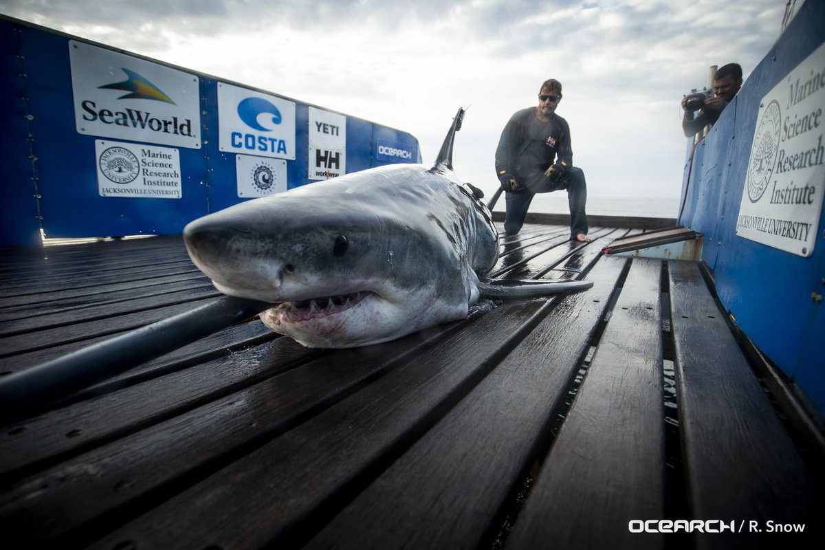 Media Tweets by White Shark Miss May (@MissMay_Shark) | Twitter