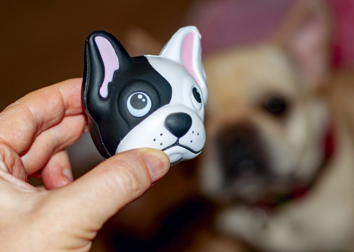 Goose&#39;s eye on the prize... #Frenchie #frenchbulldog <br>http://pic.twitter.com/5QfbMPbNcH