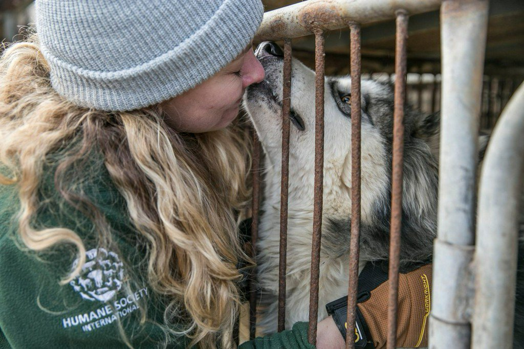 Dogs rescued from S. Korea 'meat farm' coming to West Michigan https://t.co/TAoxDstPXu