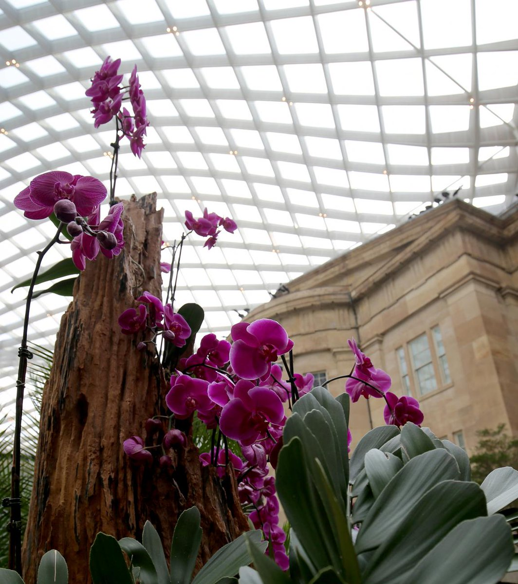 Did you know that orchids are found on every continent except Antarctica? Starting today, thanks to @SIGardens  you'll find these vibrant blooms in the #KogodCourtyard #atSAAM and @NPG  → https://americanart.si.edu/exhibitions/orchids…