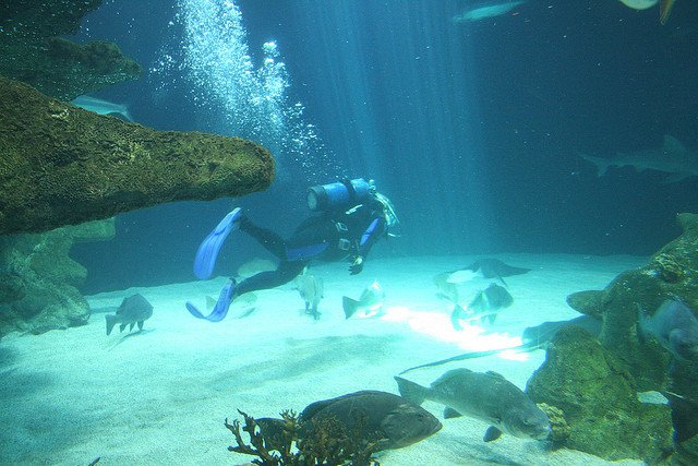 Celebrate scuba diving today 10 am to 2 pm at the @abqbiopark! Learn about Scuba classes and trips, and where to purchase equipment and supplies. Guests can also enter for a grand-prize giveaway of a dive in the Aquarium's Shark Tank! Details at https://www.cabq.gov/culturalservices/biopark/events/scuba-day… #OneABQ