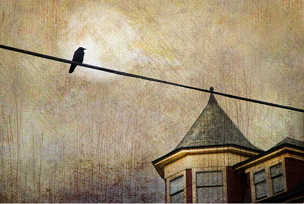 Nightfall and A Crow https://theresa-tahara.pixels.com/featured/nightfall-and-a-crow-theresa-tahara.html… Photographed Commercial Drive area. #crow #corvid #raven #textures #moon #giftideas #urban #crows #Vancouver #CommercialDrive #Kamloops #moon #moody #city #photography #KamloopsPhotographer