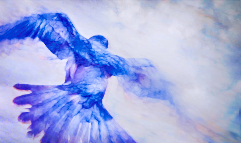 Crow in Flight https://theresa-tahara.pixels.com/featured/crow-in-flight-theresa-tahara.html… Slow shutter. #crow #crows #corvid #birds #motionphotography #Kamloops #blues #giftIdeas #prints #color #colourphotography #posters #canvasprints #wallArt