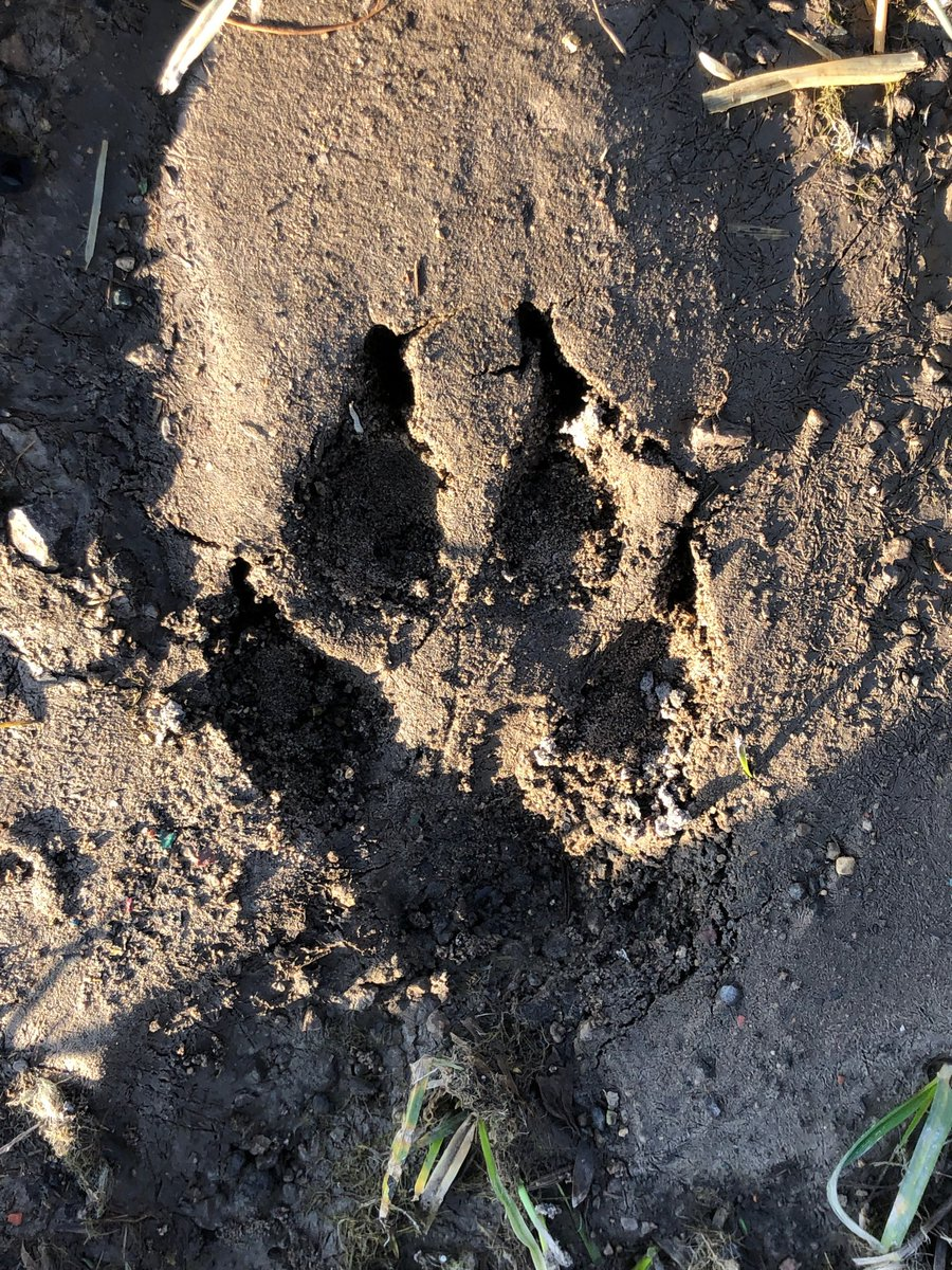 Anyone know what made this footprint?  Have a good day