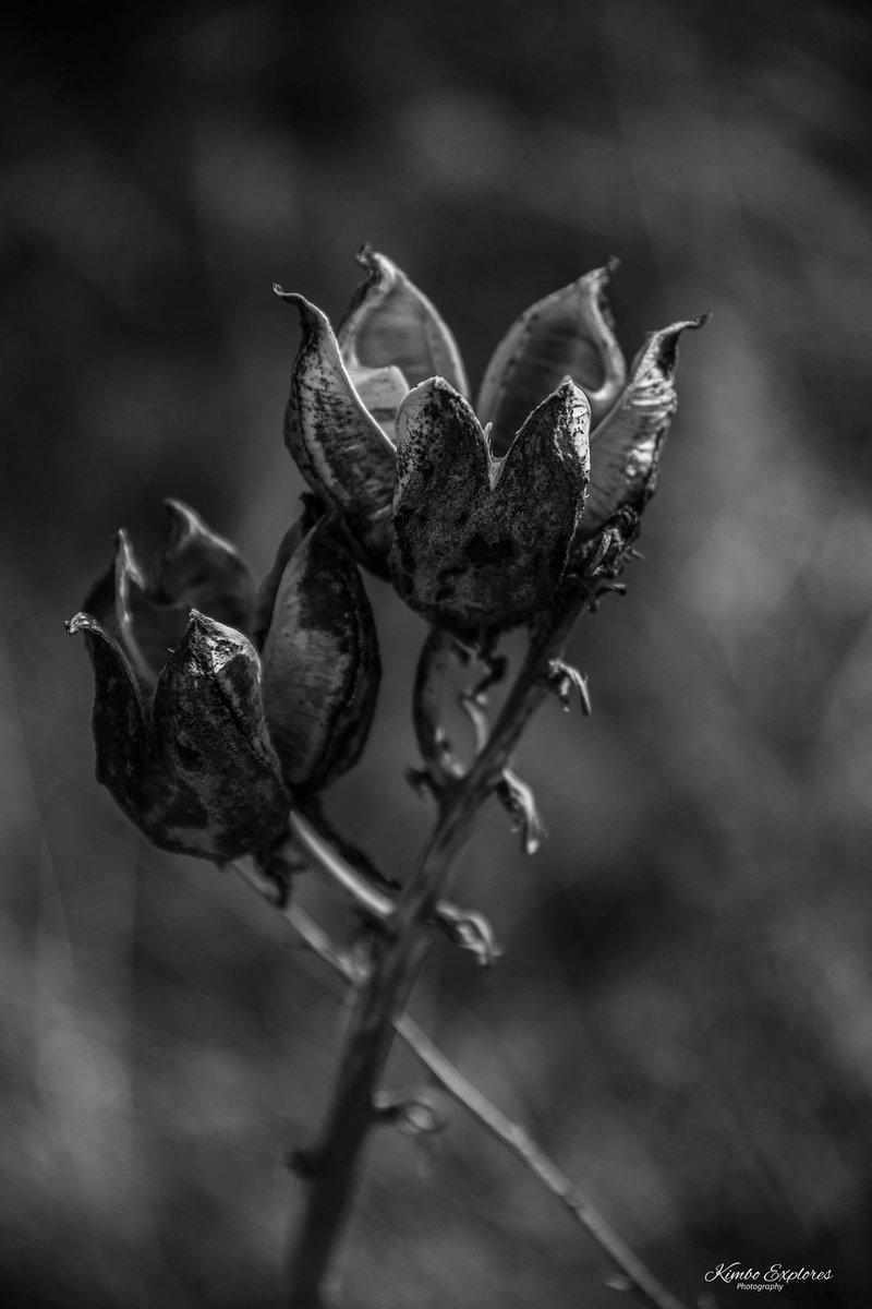 Quit watering dead flowers 🖤 #blackandwhite #nikon #flowers #nature #optoutside #death https://t.co/H7cTvOyFJ0 https://t.co/z3RrbbkriL
