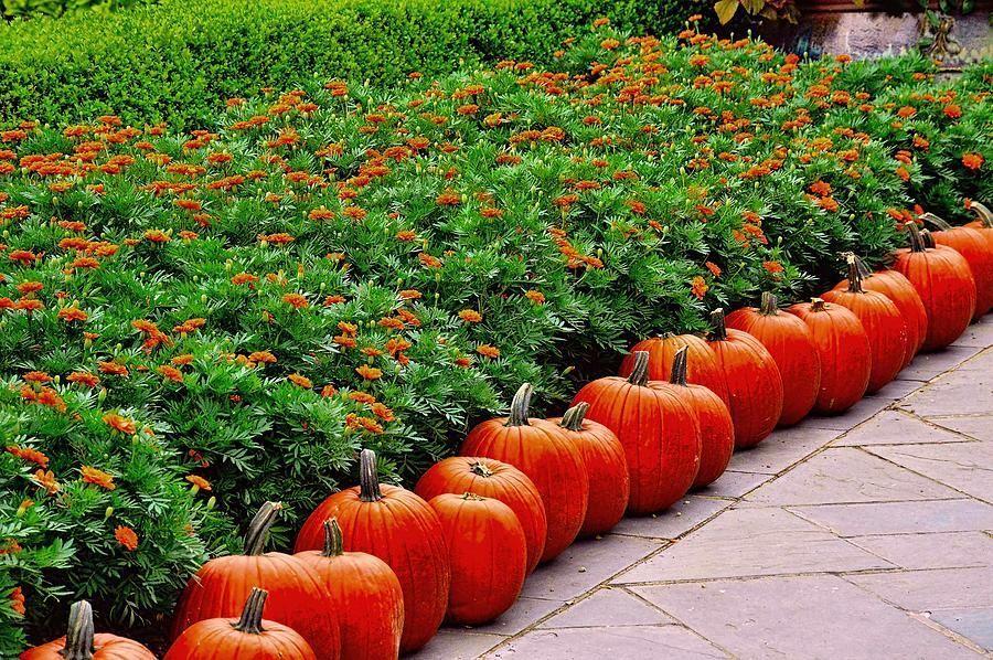 A Pumpkin Lane #Autumn #Photography #Autumn #Dallas #Texas #DianaMarySharpton https://t.co/Fv8kG2o8vd