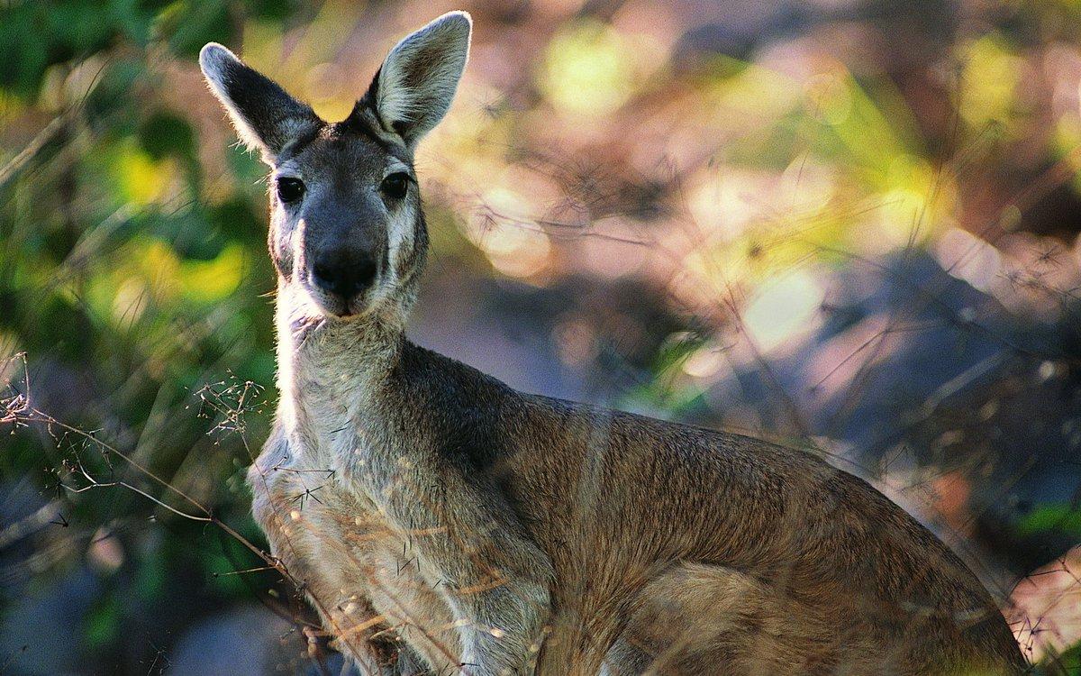 Полиция Дании ищет кенгуру, сбежавшего из частного дома