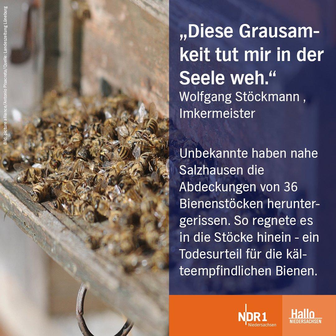 70.000 Bienen sind dabei verendet. 😔 Zeugen werden gebeten, sich an die örtliche Polizei zu wenden. Mehr dazu 👉 https://t.co/FI7XVHimJY