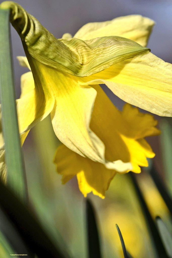 wat een 💚🌞dag!  #nature #birds #flowers